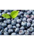 Blueberry / Blaubeere, 10 Liter